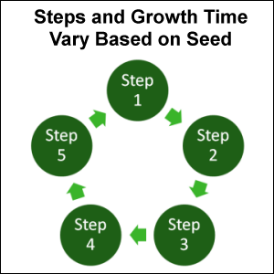Steps and Growth Time Vary Based on Seed