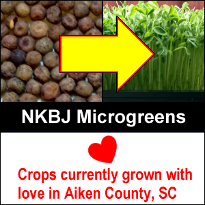 NKBJ Microgreens crops currently grown with love in Aiken County, SC